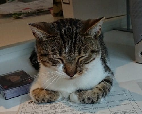 Bobby, le chat de Nicomak