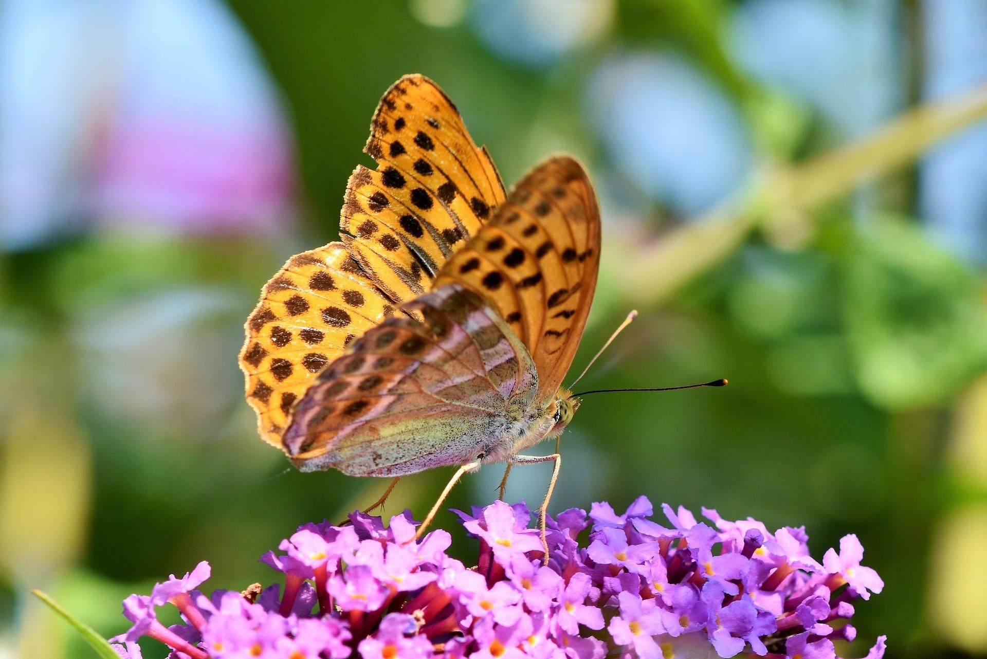 papillon prêt à s'envoler