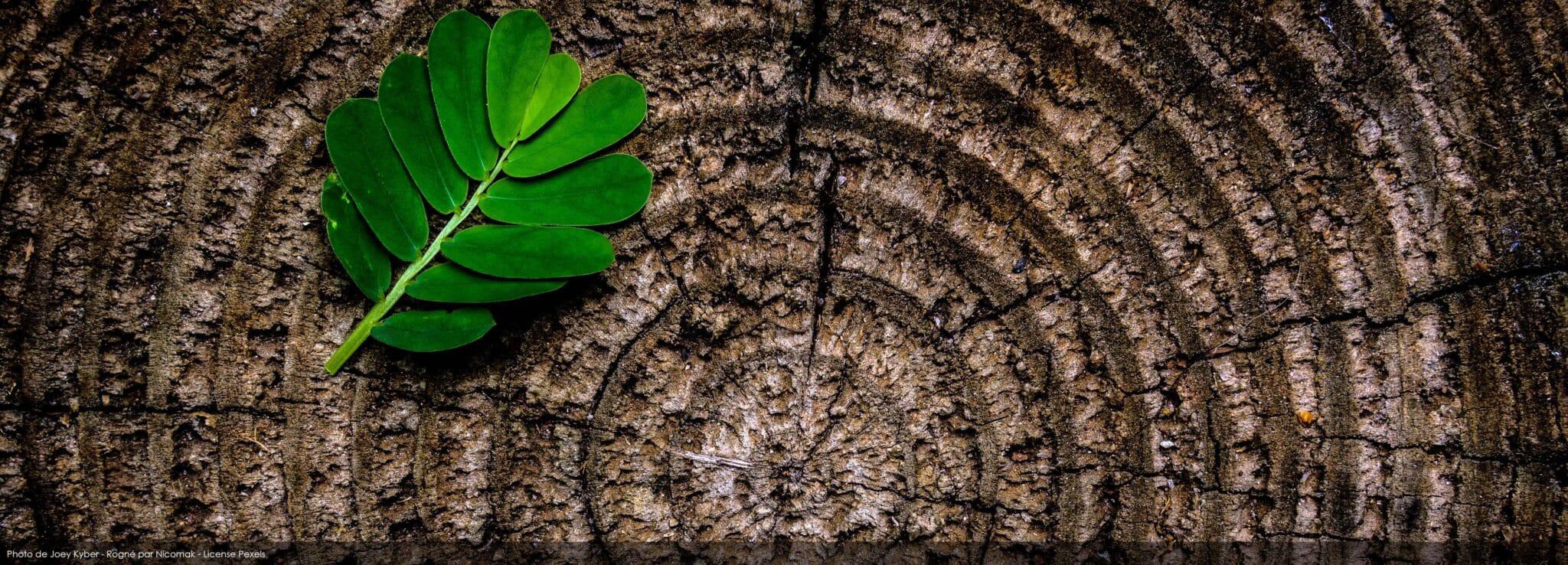 arbre ecologie